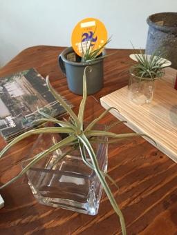 雑貨&植物の紹介